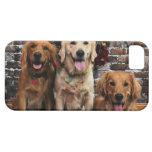 Christmas - Golden Retriever - Packer Bella Darby iPhone 5 Cases