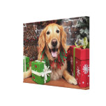 Christmas - Golden Retriever - Sidney Stretched Canvas Prints