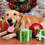 Christmas - Golden Retriever - Wrigley Photo Cutouts