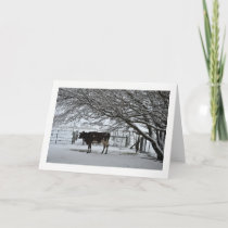 Christmas. Greeting Card. Cow in Snow. Holiday Card