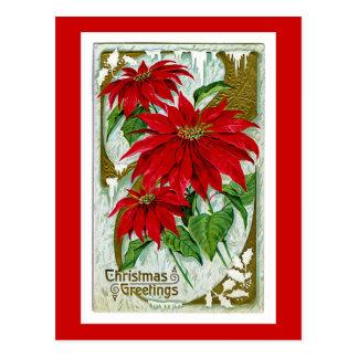 Christmas Greetings Pointsettia Postcard