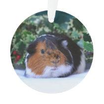 Christmas Guinea Pig Ornament