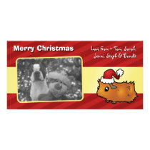 Christmas Guinea Pig (scruffy) Card