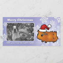 Christmas Guinea Pig (scruffy) Holiday Card