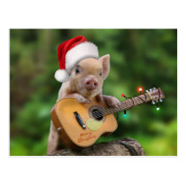 Christmas guitar pig postcard