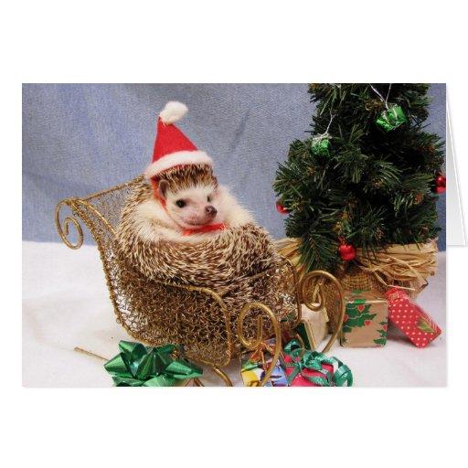 Christmas Hedgehog Card   Zazzle