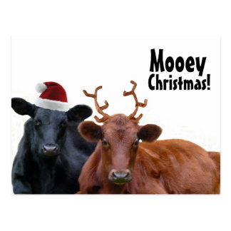 Christmas Holiday Cows in Santa Hat and Antlers Postcard