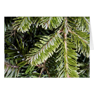 Christmas Holiday Evergreen Pine Tree Background Cards