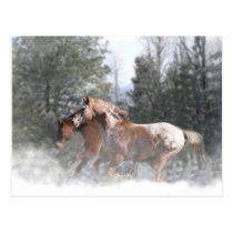 Christmas Holiday Horse Postcards