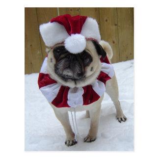 Christmas Holiday Pug in Snow Postcard