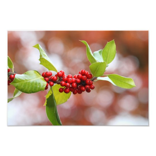 Christmas Holly Photo Print