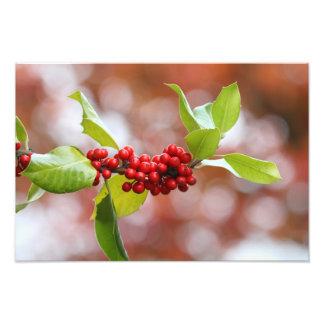 Christmas Holly Photo Print