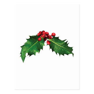 Christmas Holly Postcard
