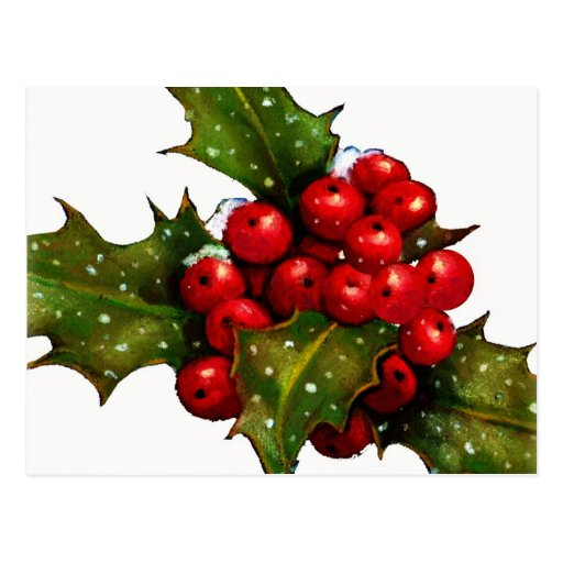 Christmas Holly With Berries and Snow: Art Postcard