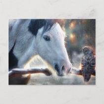 Christmas Horse and Beautful Owl Postcard