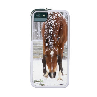 Christmas Horse Lover iPhone SE/5/5s Cover