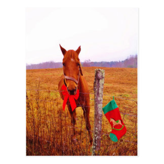 Christmas Horse with bow & stocking Postcard