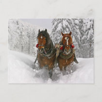 Christmas Horses Holiday Postcard