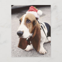 Christmas Hound Holiday Postcard