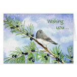 Christmas junco in the juniper greeting cards