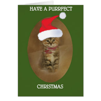 CHRISTMAS KITTEN  GEEETING CARD