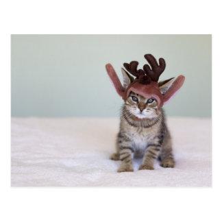 Christmas Kitten Post Cards