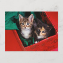 Christmas Kittens Holiday Postcard