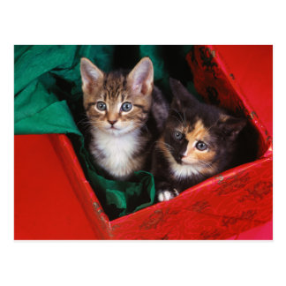 Christmas Kittens Postcard