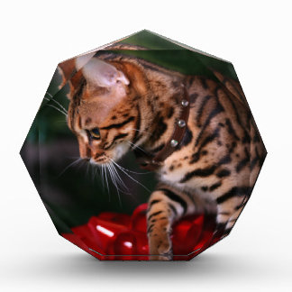 Christmas Kitty Photo (Domestic Bengal Cat) Acrylic Award