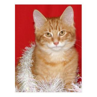 Christmas kitty postcard