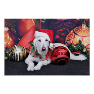 Christmas - LabraDoodle - Izzy Posters