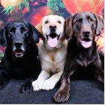 Christmas - Labrador - Dude Jag and Mocha Photo Cutouts