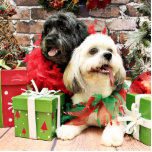 Christmas - Lhasa Apso - Clover and Pixie Photo Cut Outs