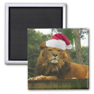 Christmas Lion Wearing Santa Hat 2 Inch Square Magnet