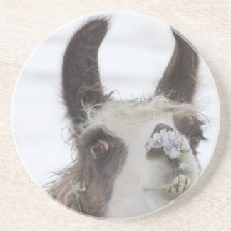 Christmas Llama with Snow on Nose for the Holidays Coasters