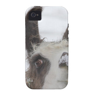 Christmas Llama with Snow on Nose for the Holidays Vibe iPhone 4 Covers