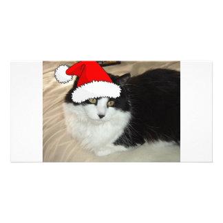 Christmas Long Haired Black and White Kitten Card