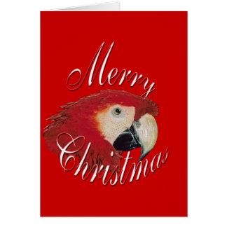 Christmas Macaw Card