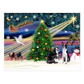 Christmas  Magic-Boston Terrier (2) Postcard