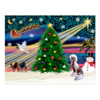 Christmas Magic Chinese Crested 4 Postcard