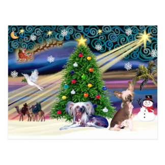 Christmas Magic Chinese Crested (two) Postcard