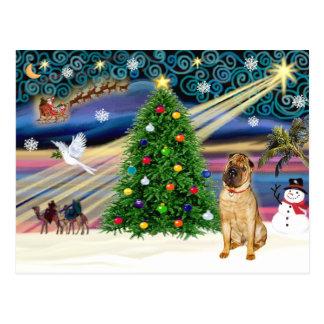 Christmas Magic Chinese Shar Pei (fawn) Postcard