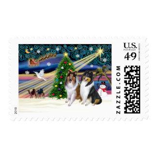 Christmas Magic Collies (two, tri + sable) Postage Stamps