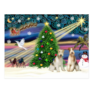 Christmas Magic Fox Terrier (Wire-two) Postcard