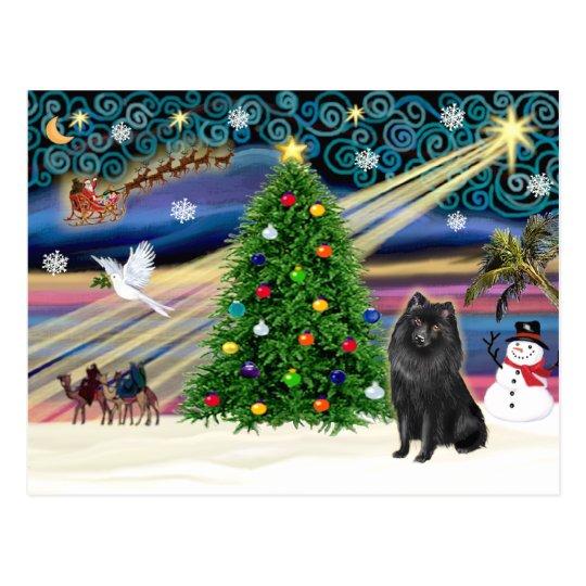 Christmas Magic Schipperke Postcard