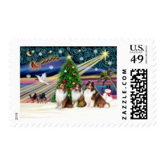 Christmas Magic Shetland Sheepdogs (3 Sable) Postage Stamps