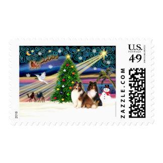 Christmas Magic Shetland Sheepdogs (two-tri+sable) Postage Stamp