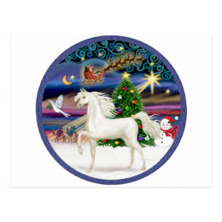 Christmas Magic - White Arabian Horse Postcard
