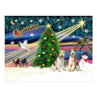 Christmas Magic - Wire Fox Terriers (two) Postcard