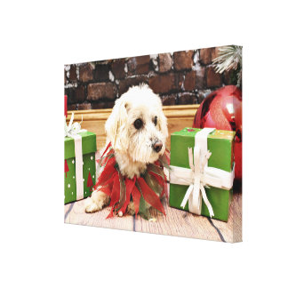 Christmas - MaltiPoo - Baxter Stretched Canvas Print